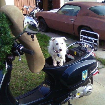 Dog scooter gebraucht schweiz