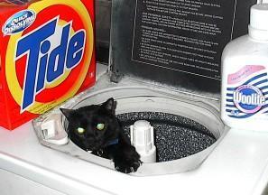 Cat Bath - Tide or Woolilte?