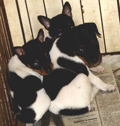 Tehachapi Dogs Kennel For Sale